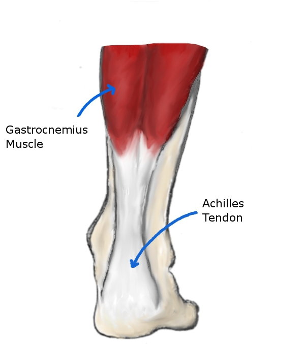 Achilles Tendon Rupture Ankle Special Tests